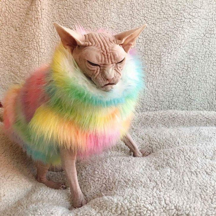 tęczowy kot