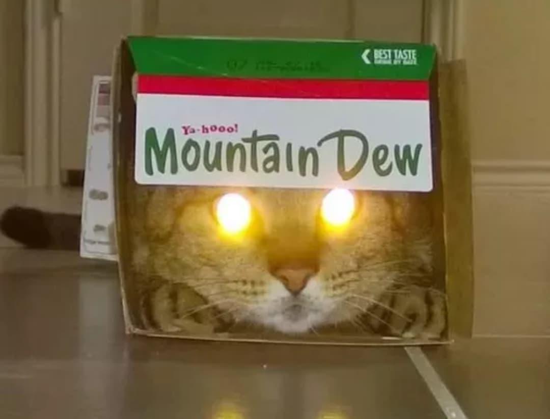 kot ze świecącymi oczami