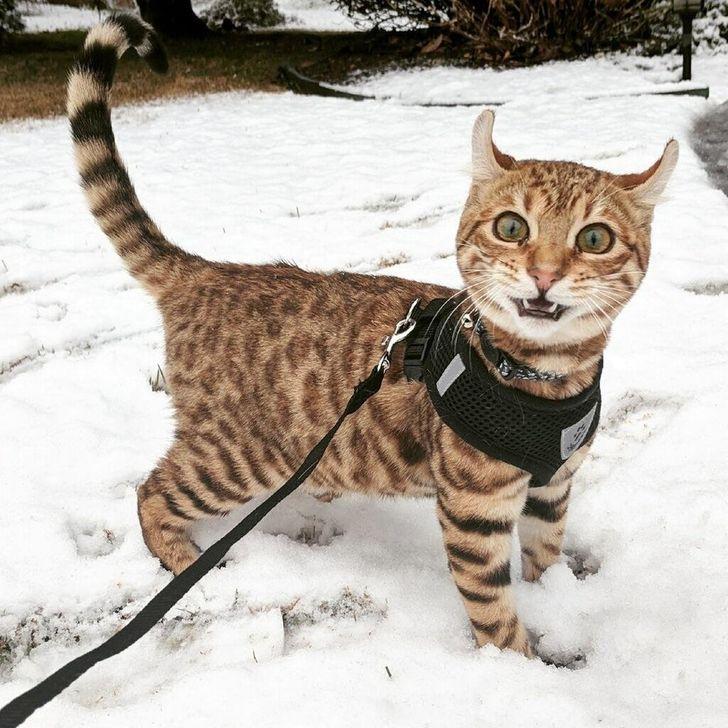 kot na śniegu