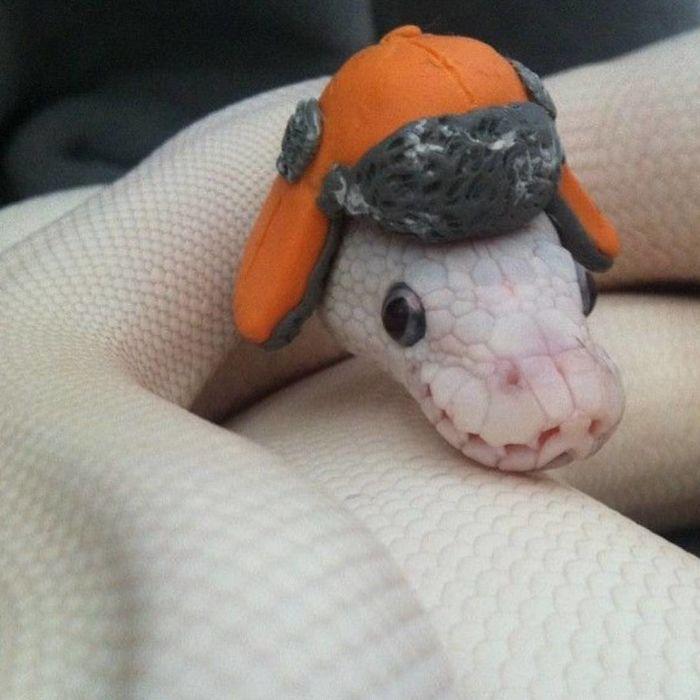 wąż w czapce