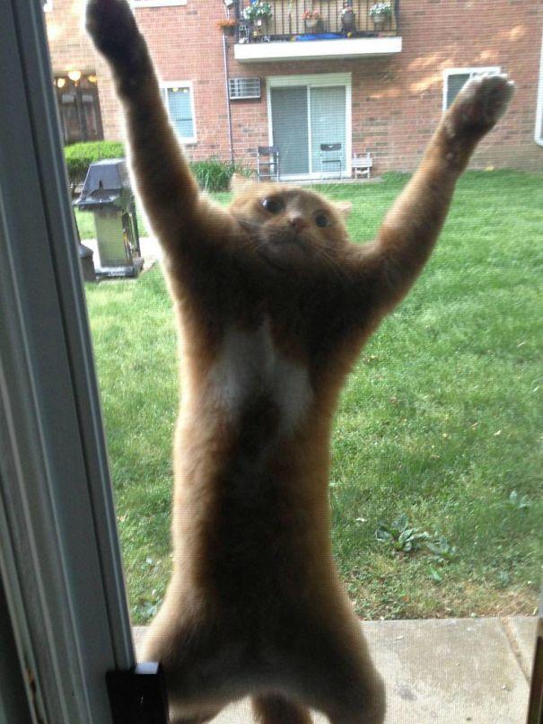 kot na drzwiach