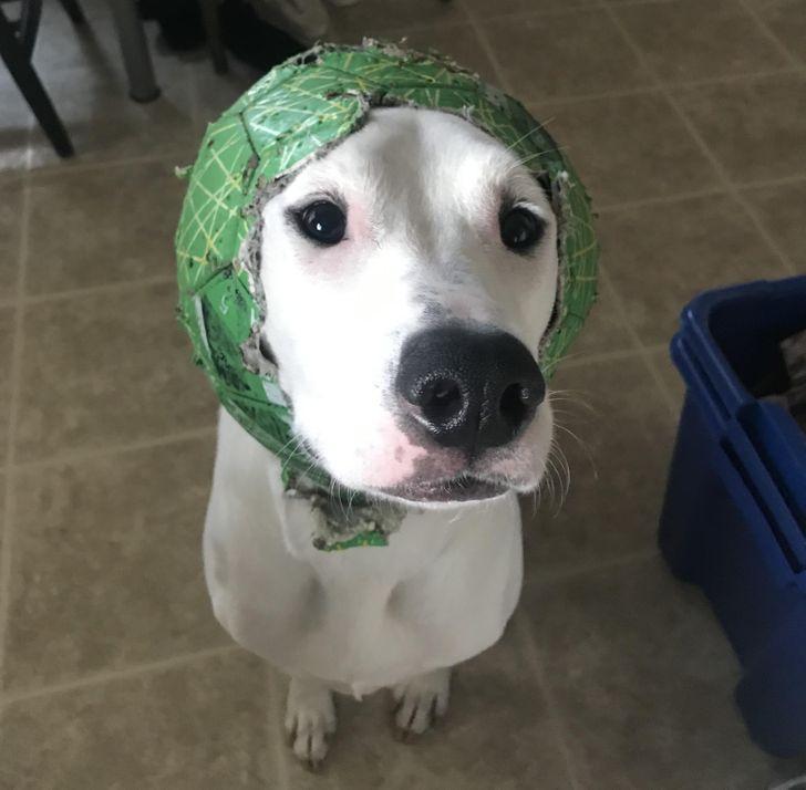 pies zniszczył piłkę