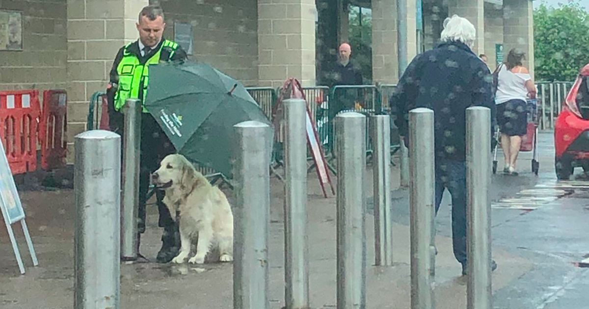 Ochroniarz uratował moknącego psa