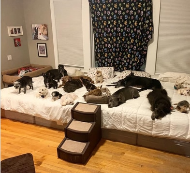 Para Amerykanów wydała 55 tys. dolarów, żeby stworzyć w swoim domu raj dla 20 adoptowanych psów