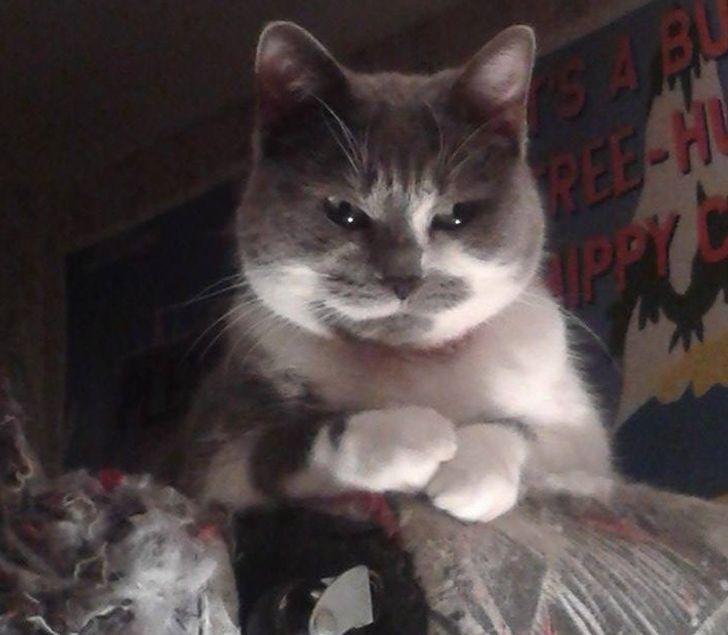 24 wściekłych kotów, z którymi lepiej nie zadzierać