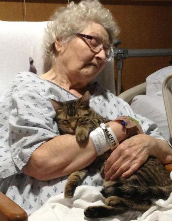 21 zdjęć, które udowadniają, że koty mają bardzo dobre serduszka