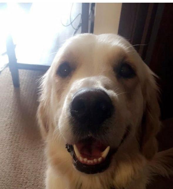 35 podnoszących na duchu zdjęć psów, które sprawią, że Twój dzień będzie lepszy