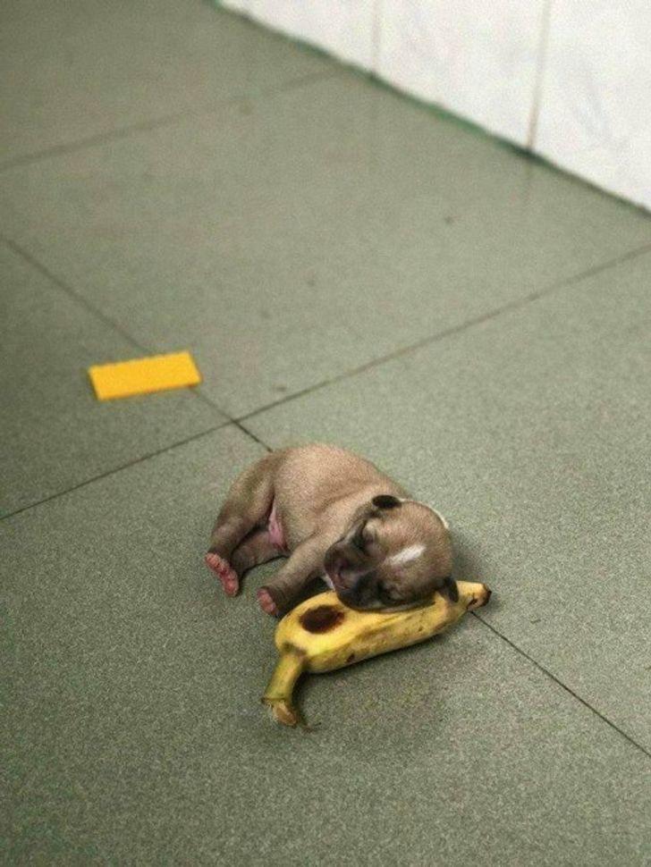 15 zwierzaków, które zasnęły w najbardziej nieoczekiwanych sytuacjach