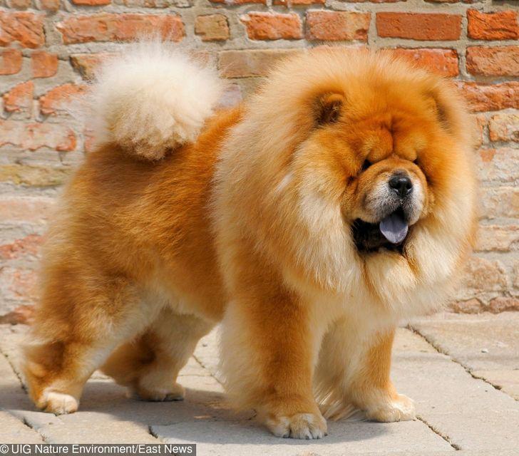 10 najdroższych psów świata, których ceny mogą przyprawiać o zawroty głowy