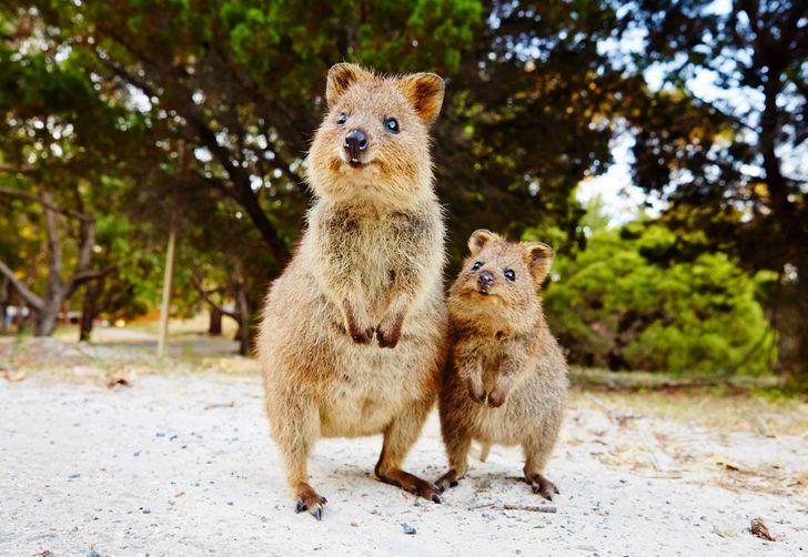 18 zdjęć, które utwierdzą Cię w przekonaniu, że nie chcesz mieszkać w Australii