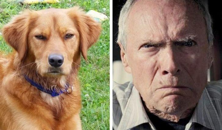 18 psów, które tak bardzo przypominają ludzi, że to aż przerażające