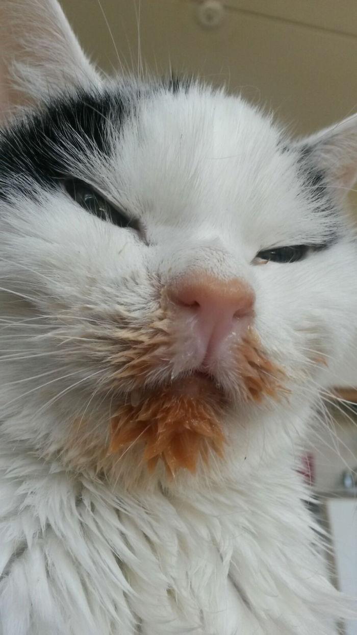 38 bezwstydnych kotów, które jedzą niczym małe świnki