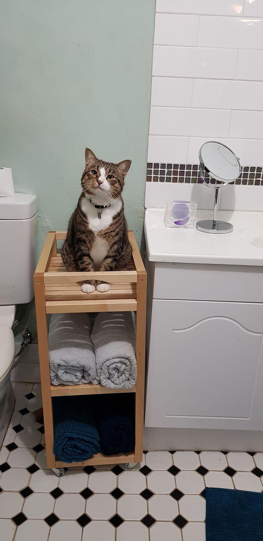 40 kotów, które mają gdzieś pojęcie przestrzeni osobistej