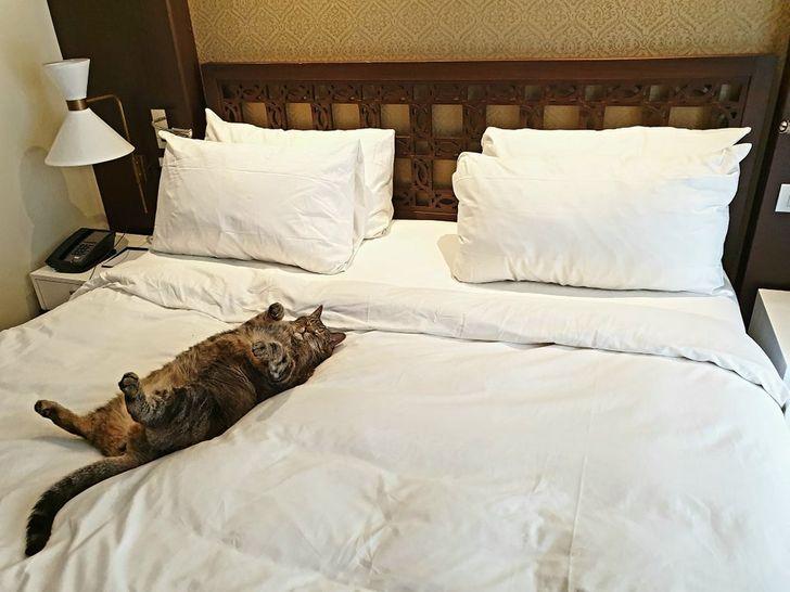15 kotów, które uważają, że to ludzie są ich zwierzakami domowymi, a nie odwrotnie