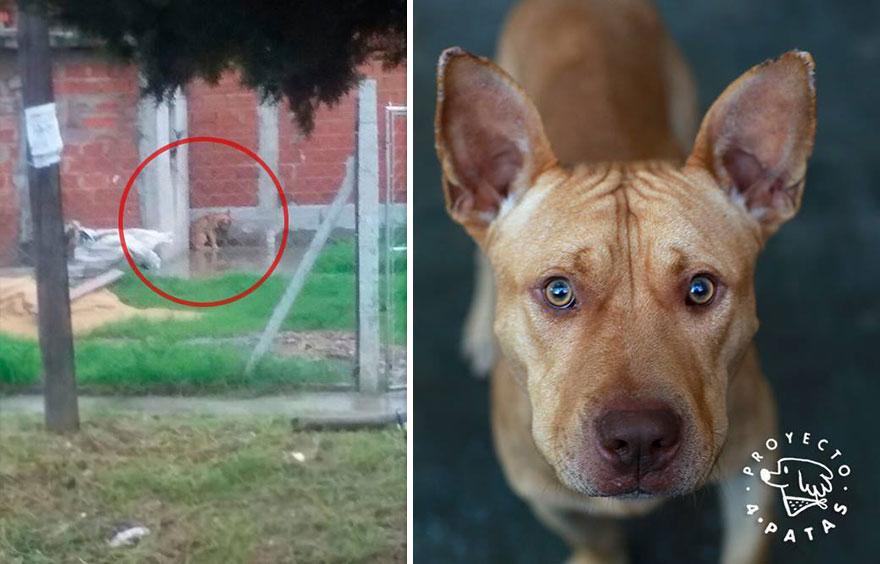 Aż serce ściska! 65 zdjęć przed i po psiaków z ulicy, które znalazły nowe domy