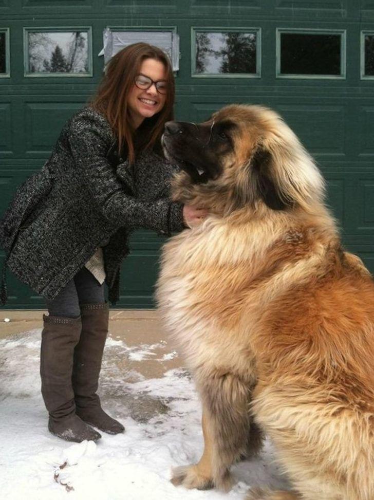 21 zwierzaków, których rozmiary przekraczają ludzkie pojęcie