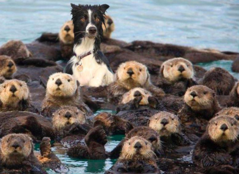 25 psiaków, które są tak śmieszne, że aż będziesz kulać się ze śmiechu