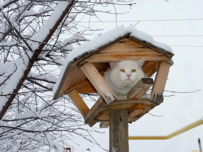 30 kotów, które próbują wmówić światu, że tak naprawdę są ptakami