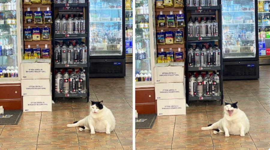 30 sklepów, w których władzę przejęły koty