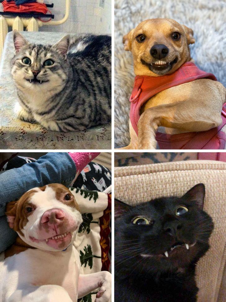 30 zdjęć, które dowodzą, że zwierzaki są zbudowane głównie z miłości