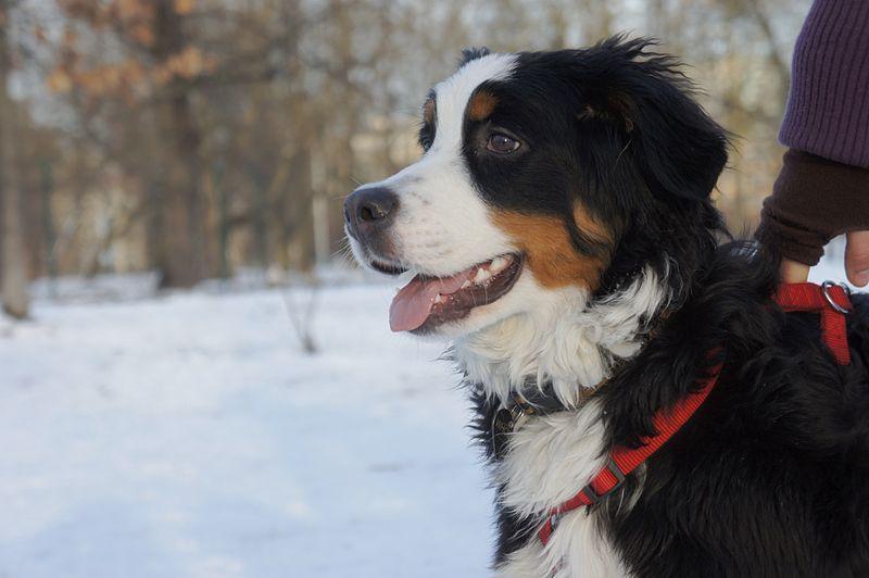 10 ras psów, które są idealne dla rodzin z dziećmi