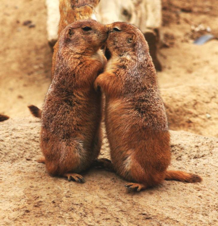 17 przedziwnych faktów o zwierzakach, które zaskoczą każdego pasjonata