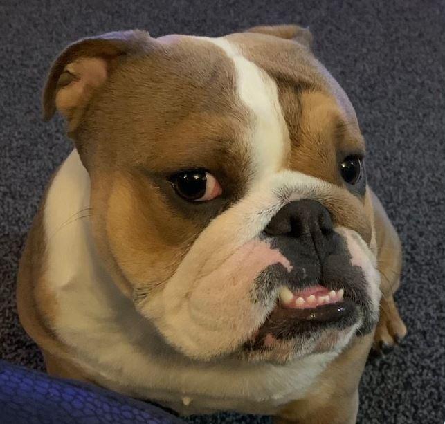 Gdyby psiaki miały Tindera – 28 zdjęć, które pokazują, jak wyglądałyby ich profilówki