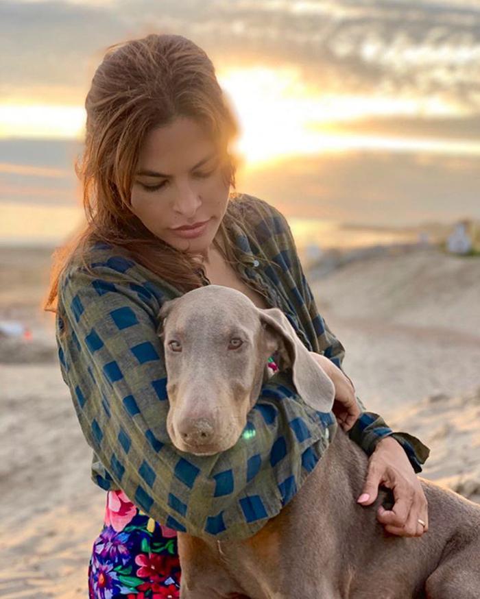 25 znanych osób, które uratowały zwierzaka z ulicy lub adoptowały go ze schroniska