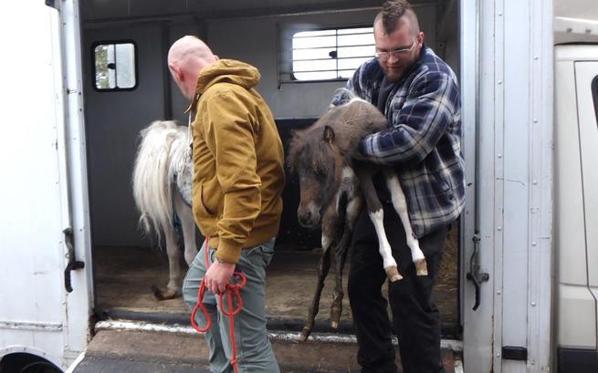 17 wygłodzonych na śmierć koni, które uratowano w ostatniej chwili. Sytuacja jest dramatyczna!