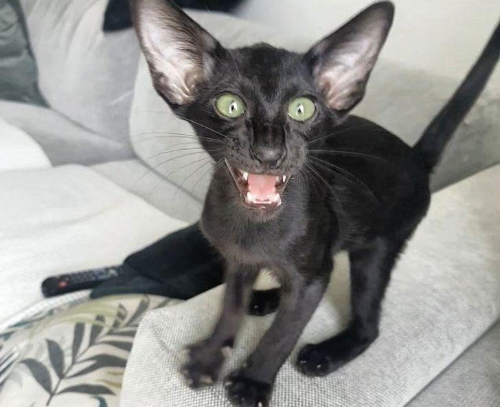 20 kociaków, które są istnym wcieleniem zła