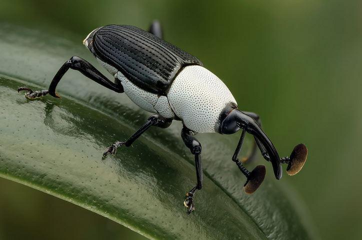 18 czarno-białych zwierząt, które wyglądają tak oszałamiająco, że aż wzdychamy z wrażenia