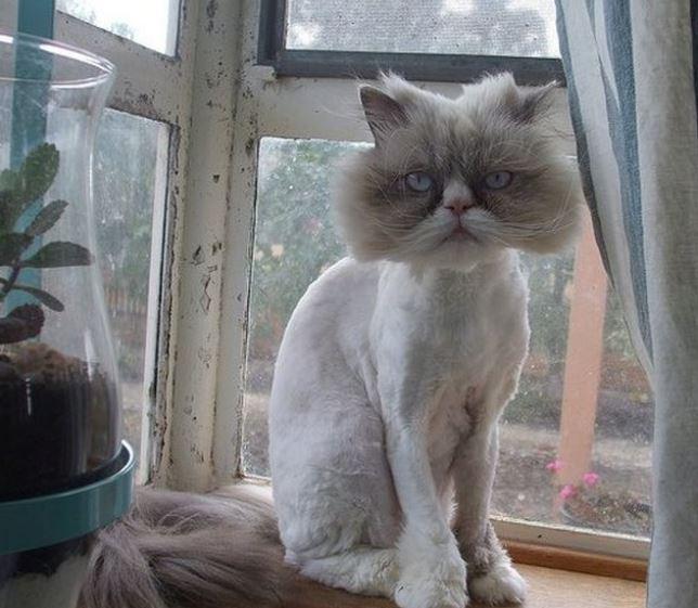 25 najbardziej nietwarzowych zdjęć kociaków, które zwalają z nóg