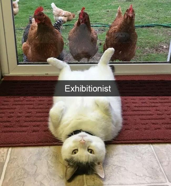20 najśmieszniejszych kotów kiedykolwiek. Leżymy ze śmiechu!