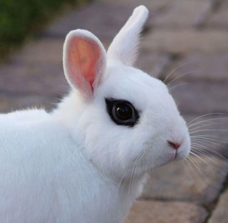 20 zwierzaków, które wygrały loterię genową