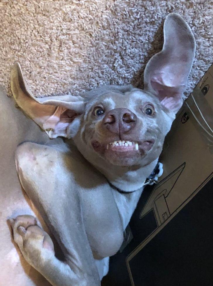 25 zwierzaków, których żywe emocje wywołają uśmiech nawet u największego ponuraka