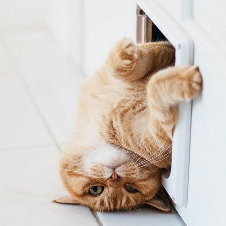 17 kotów, które nie mogą mieć już bardziej gdzieś opinii innych