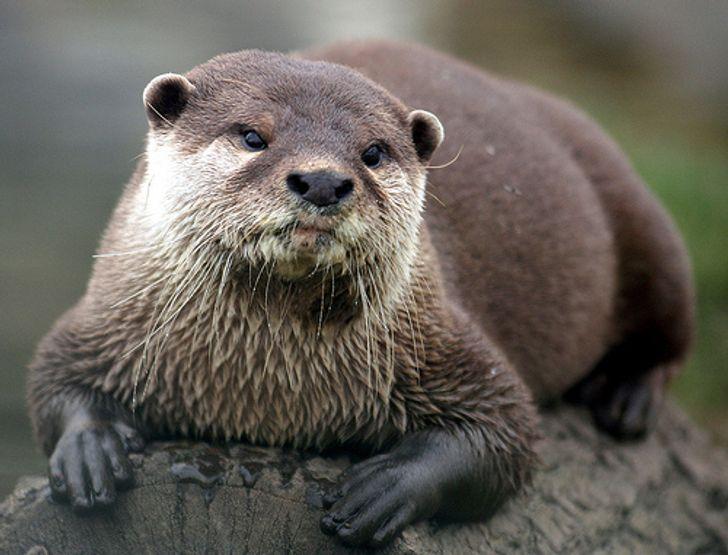 19 niesamowitych zwierząt, które potajemnie posiadają ludzkie cechy