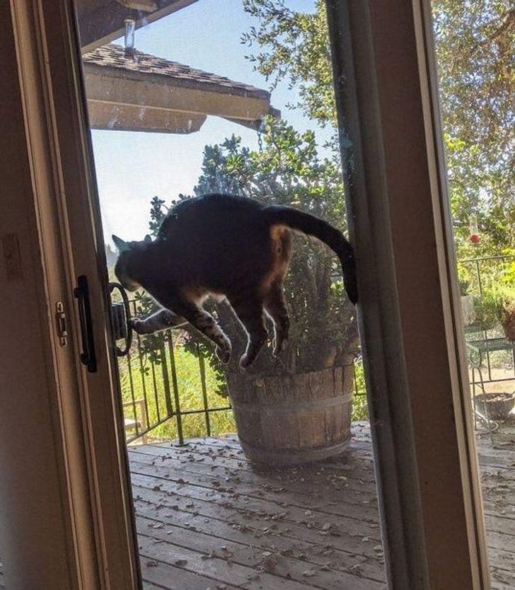 20 zdjęć, które dowodzą, że mieszkanie z kociakiem oznacza niekończącą się frajdę