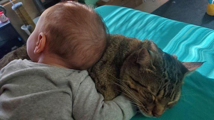 20 zdjęć, które udowadniają, że kociaki też potrafią być grzeczne i milutkie