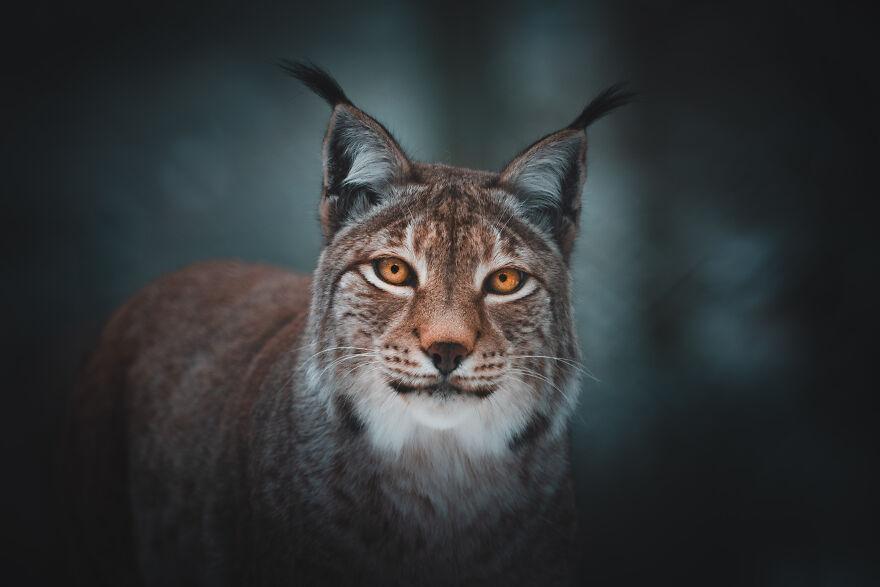 31 niesamowitych zdjęć zwierząt, które rozjaśnią Twój dzień