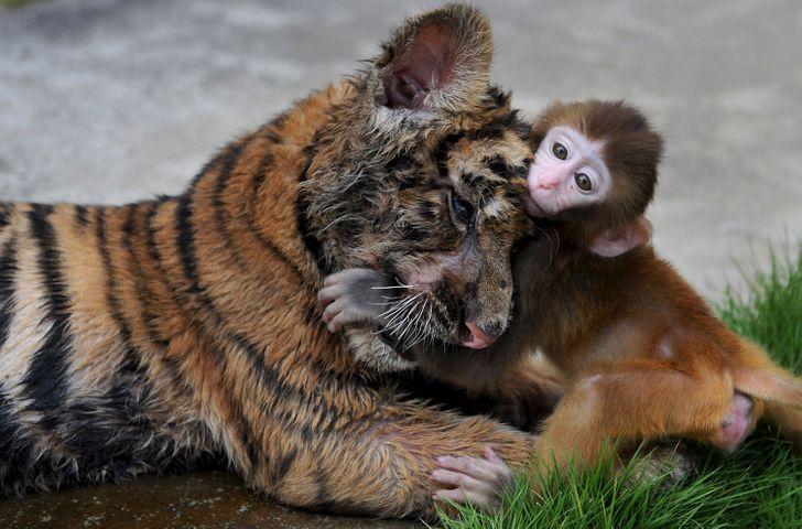 25 zwierząt, które potrafią zamienić serce w miękką papkę
