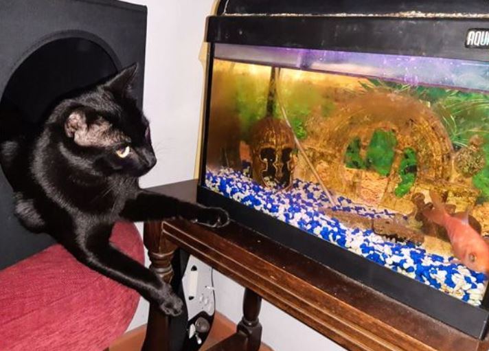 23 dziwaczne rzeczy, które robią koty. Tylko kociarze zrozumieją
