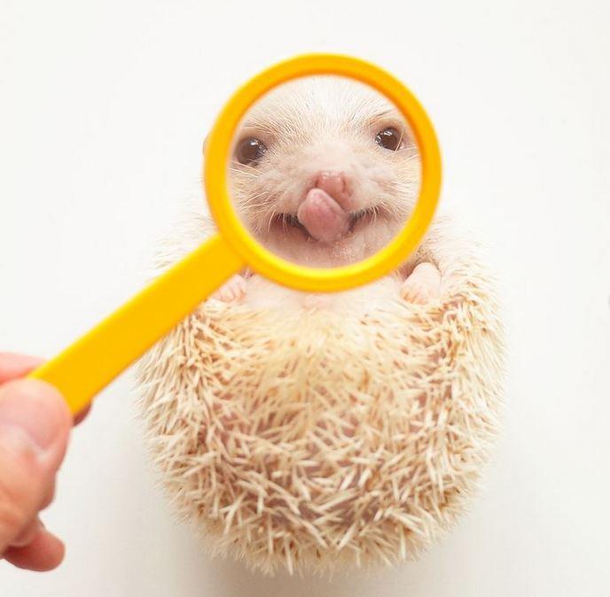 16 futrzaków, które przyprawiają o uśmiech od ucha do ucha