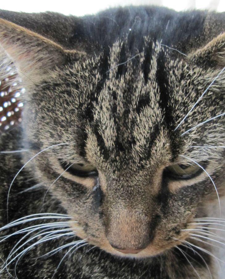 30 kotów naznaczonych przez Matkę Naturę. Nie, to nie jest Photoshop
