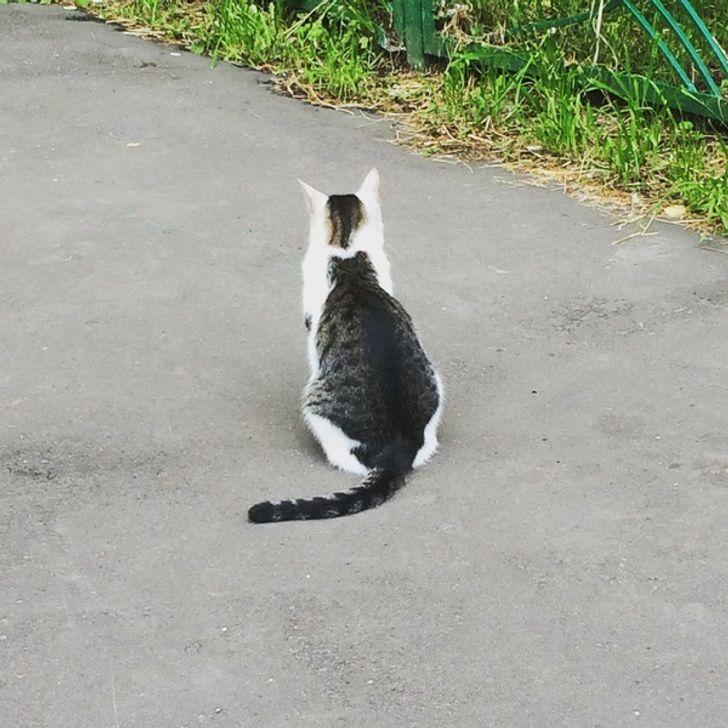 20 psotnych kotów, które całkowicie rozwaliły system