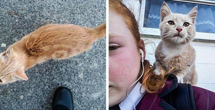 20 słodkich faktów dowodzących, że nie my wybieramy koty – to one nas adoptują