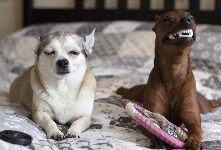 25 zdjęć, które udowadniają, że dwa zwierzaki są lepsze niż jeden