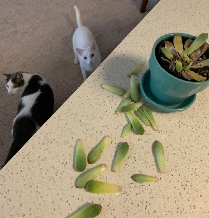 17 razy, kiedy jednym zdjęciem uchwycono prawdziwą naturę kotów