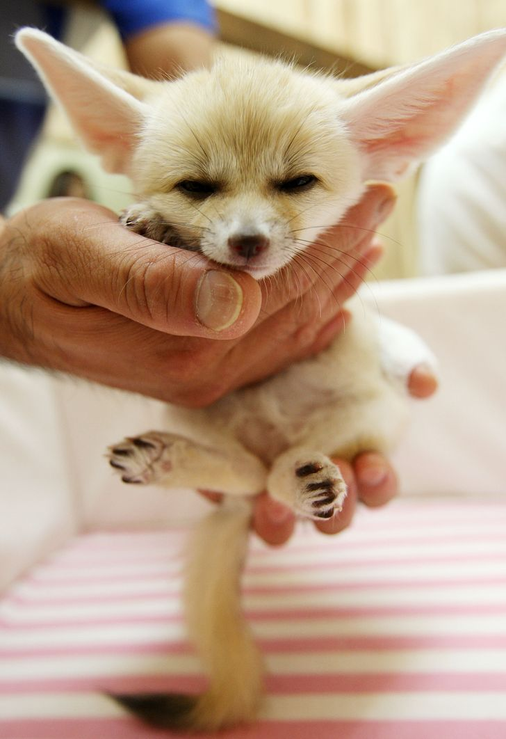 16 maleńkich zwierzątek, które ściskają za serca nas wszystkich