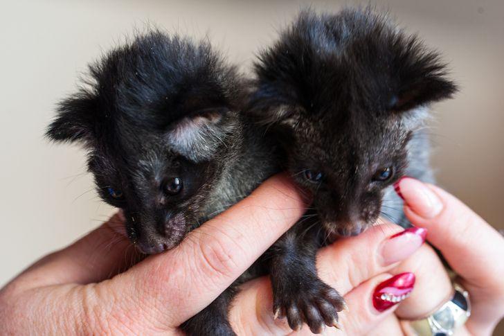 19 nietypowych zwierzątek, które sprawiają, że ludzie rozpływają się z rozkoszy
